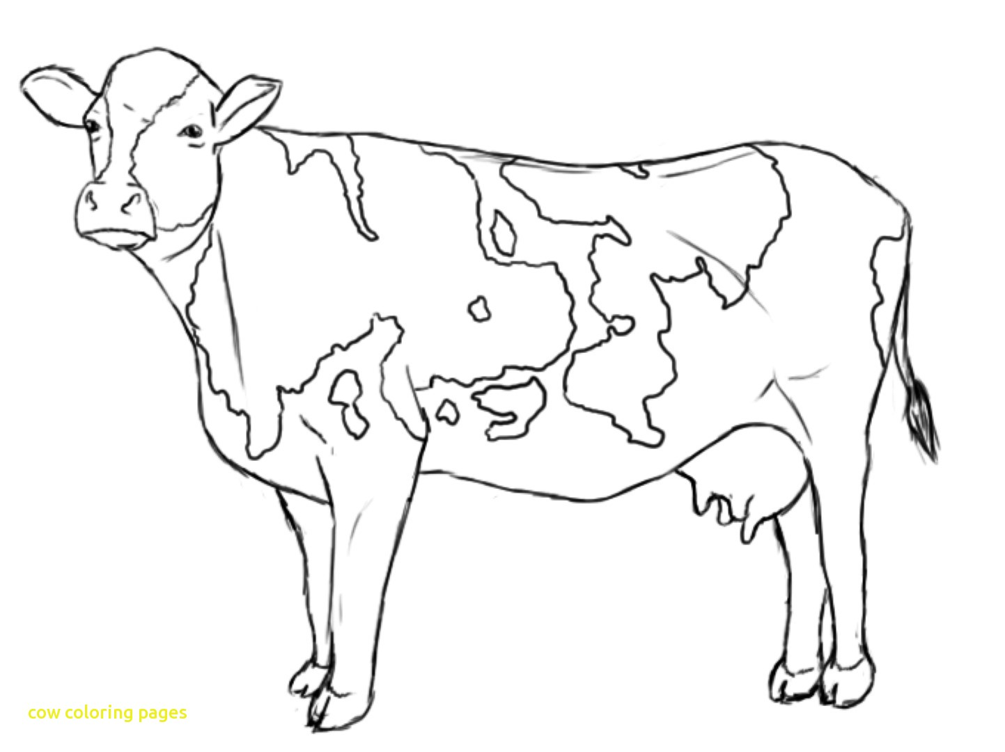 1443x1080 Cow Coloring Pages With Cow Htm Simply Simple Cow Coloring Page
