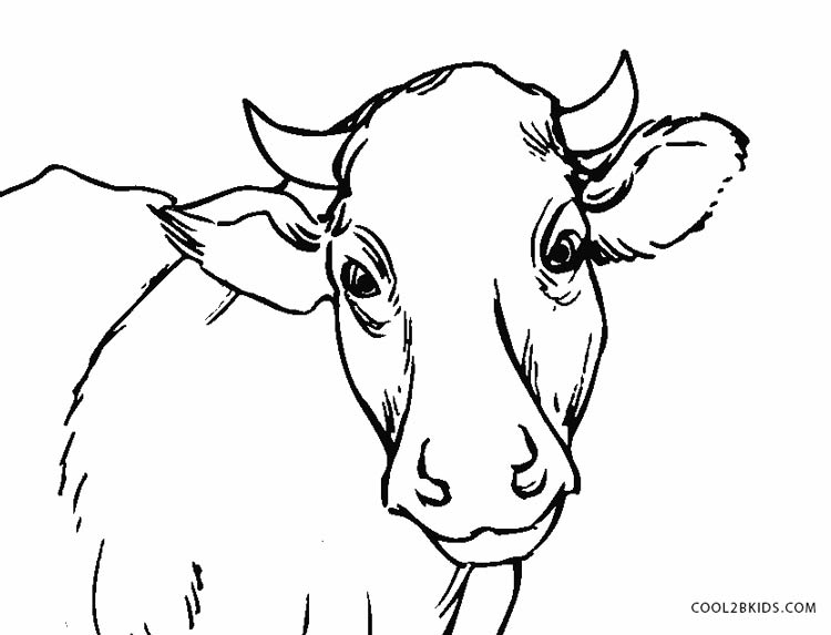 Cow Face Drawing at GetDrawings.com | Free for personal use Cow Face ...