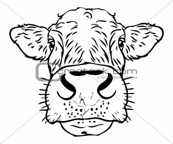Cow Face Drawing At Getdrawings Com Free For Personal Use Cow Face