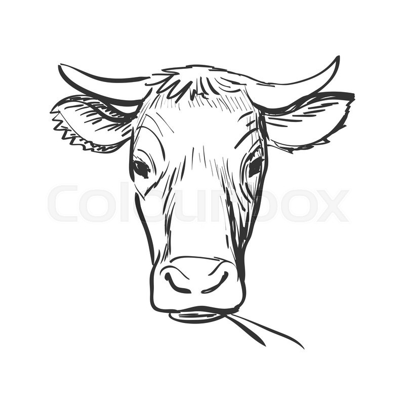 800x800 Doodle Cow, Cow Skull Sketch. Isolated In White Background