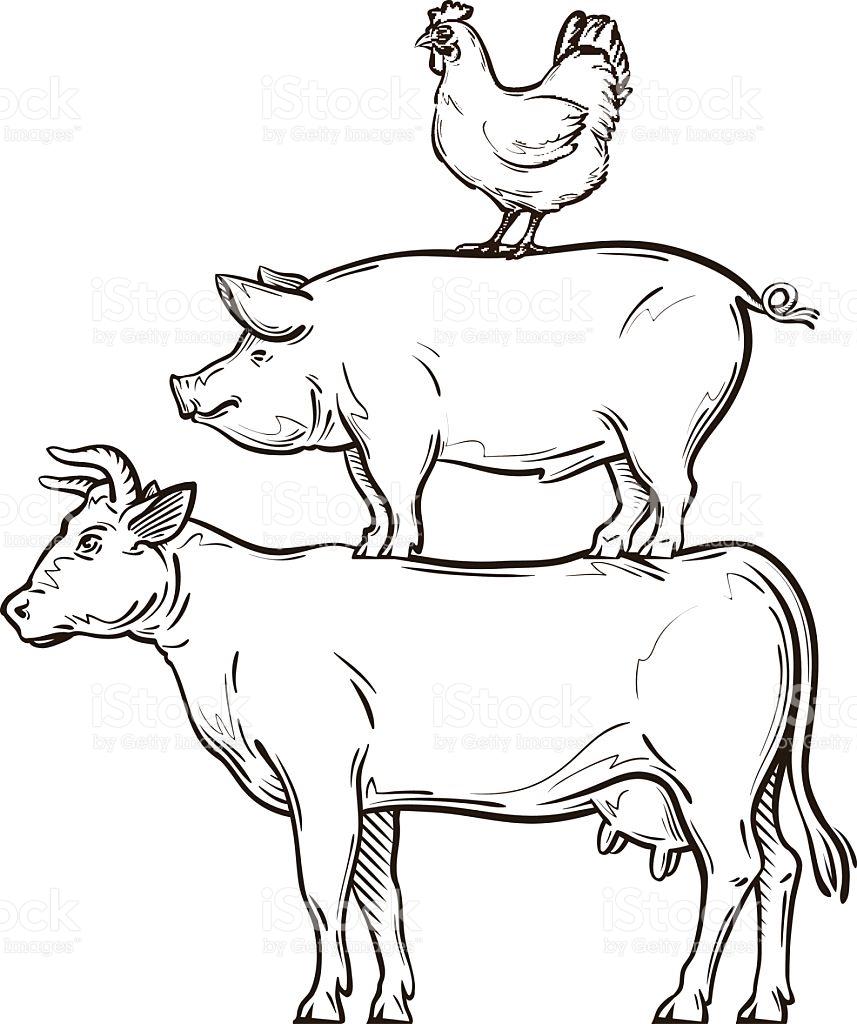 857x1024 Drawn Cattle Line Art