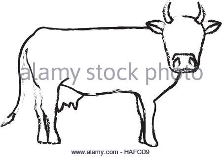 450x320 Indian Cow Head Stock Vector Art Amp Illustration, Vector Image