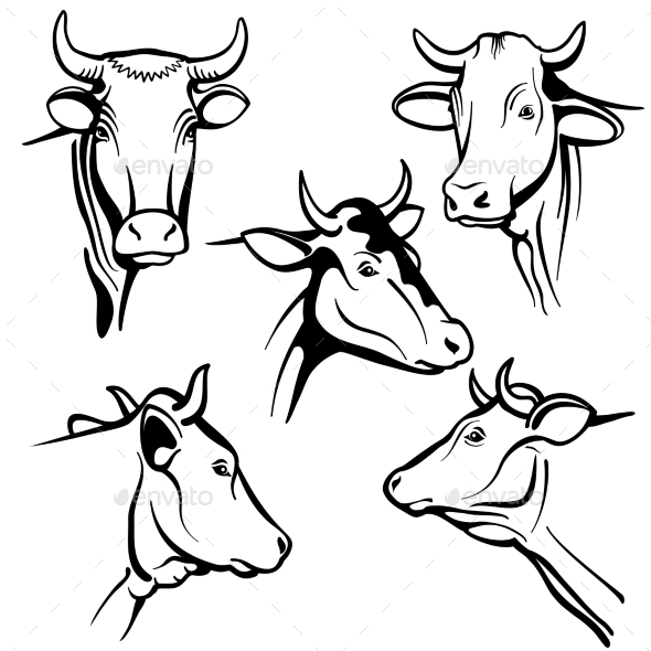 590x590 Isolated Cow Head Vector Portraits By Microvone Graphicriver
