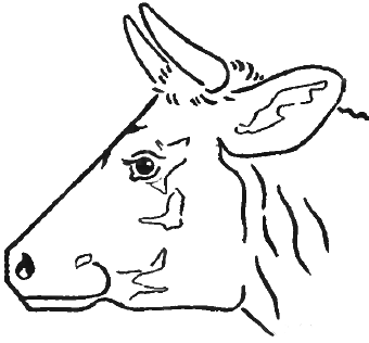 340x316 Step 6 Drawing Cow's Face And Head In Steps