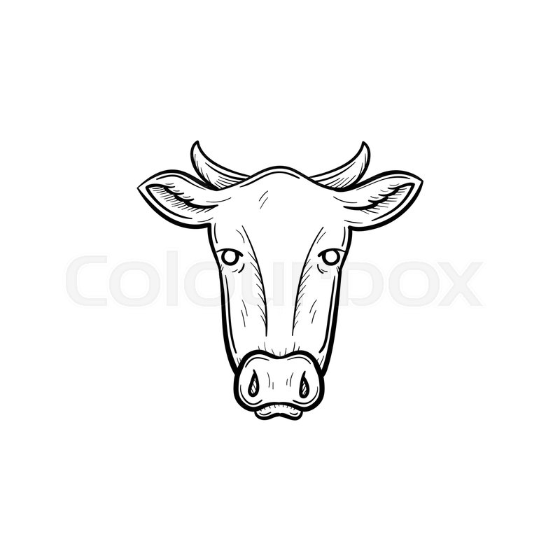 800x800 Vector Hand Drawn Cow Head Outline Doodle Icon. Cow Head Sketch