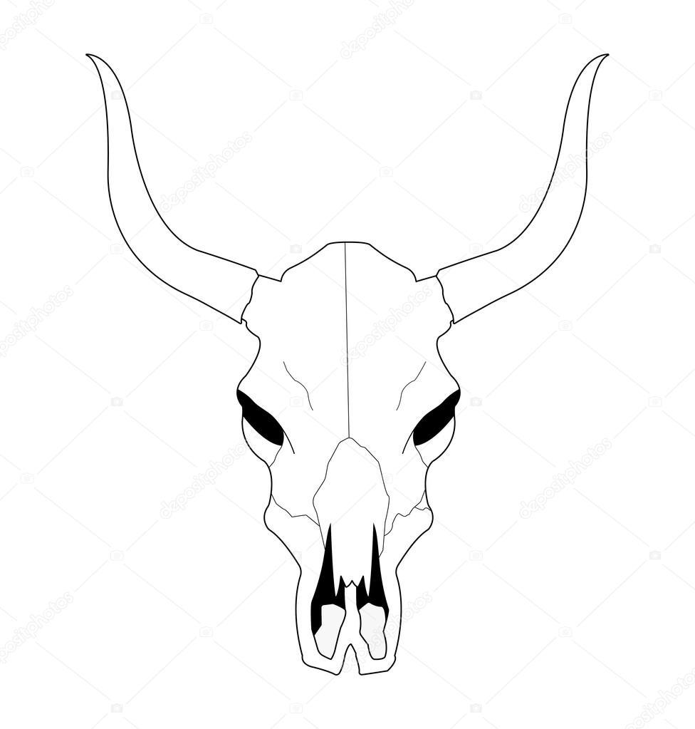 976x1023 Cow Skull With Horns Stock Vector Bsd