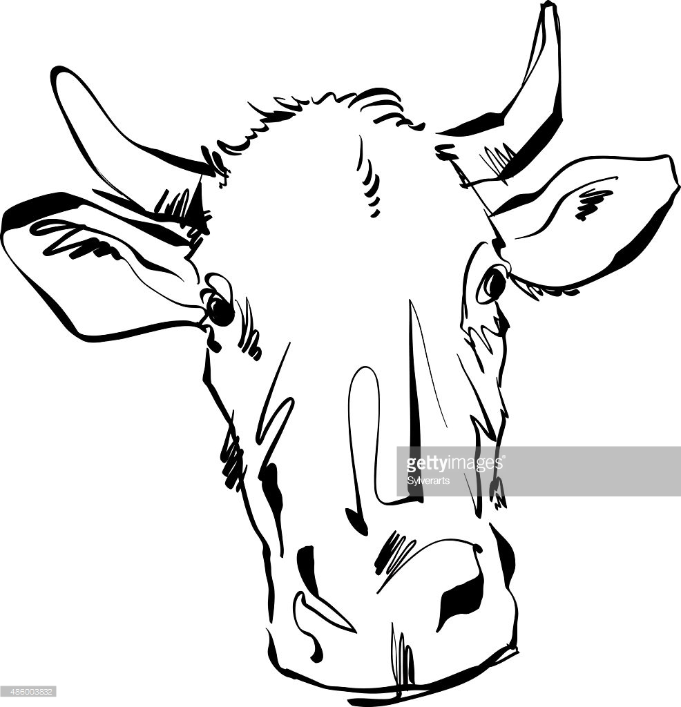 986x1024 Drawn Cattle Line Art 3280869