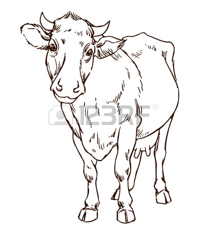 404x450 Hand Drawing Indian Zebu Cow Royalty Free Cliparts, Vectors,