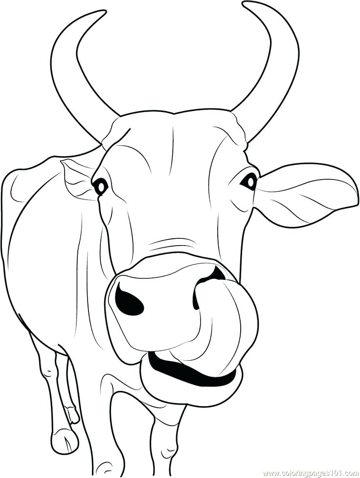 736x977 Inspirational Cow Coloring Pages Print Drawing For Kids Reading