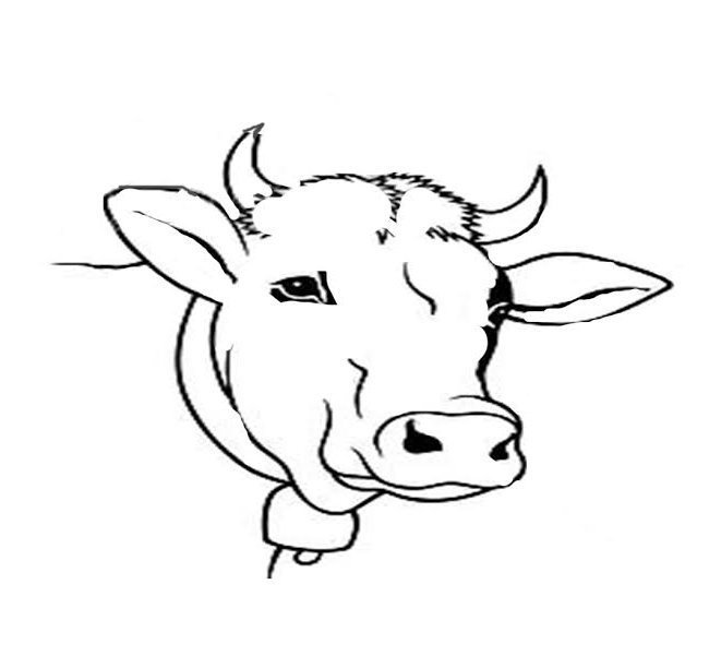650x612 Cow Template