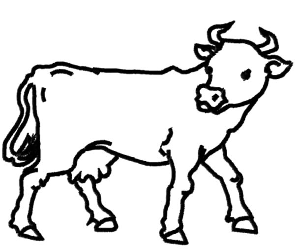 600x505 Dairy Cow Outline Coloring Pages