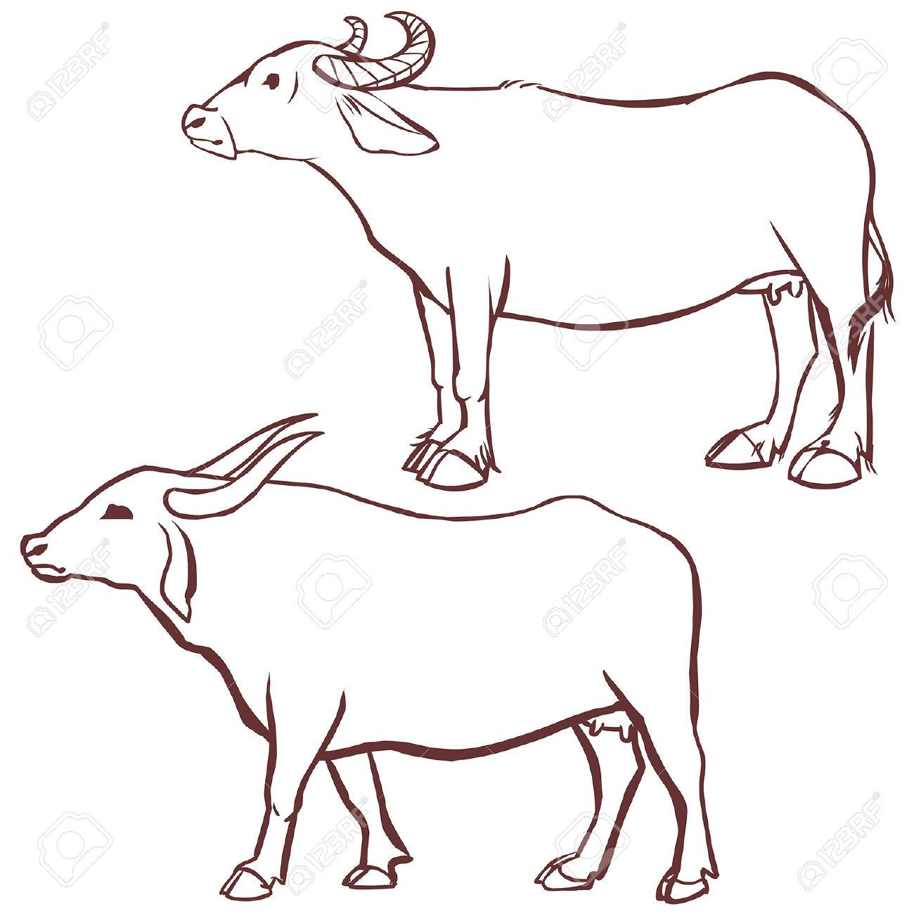 1300x1300 Buffalo Cow Outline. Vector Illustration On White Background