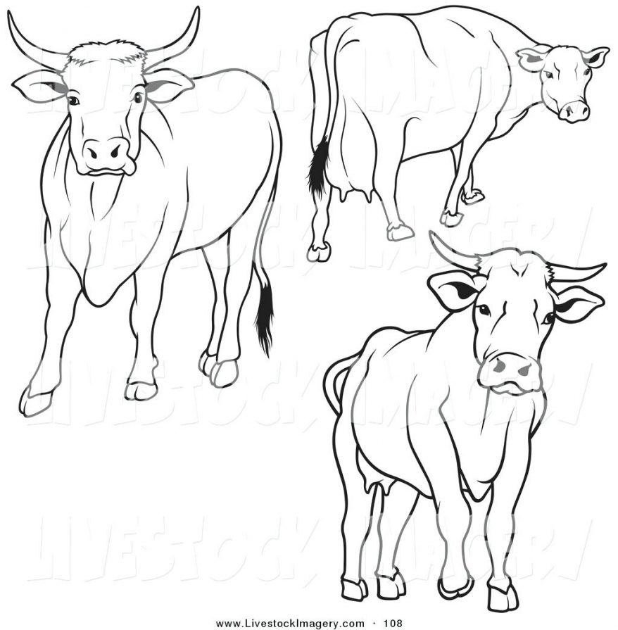 878x895 Royalty Free Stock Photo 83 Appealing Cow Outline For Essay