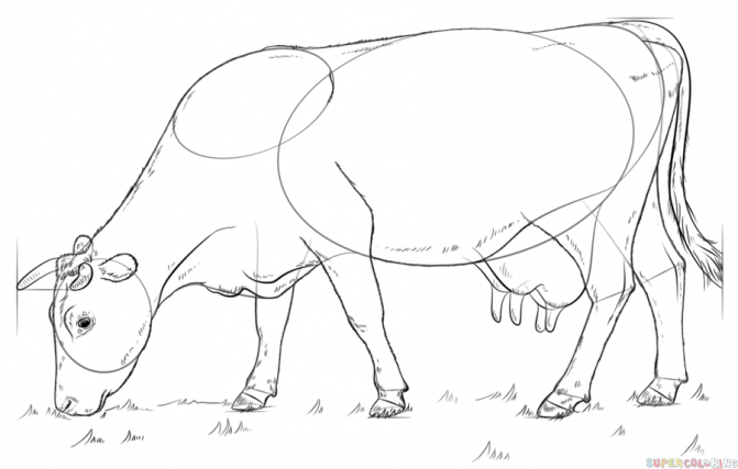 671x427 Coloring Pages Amazing How Do You Draw A Cow To Step 0 Coloring
