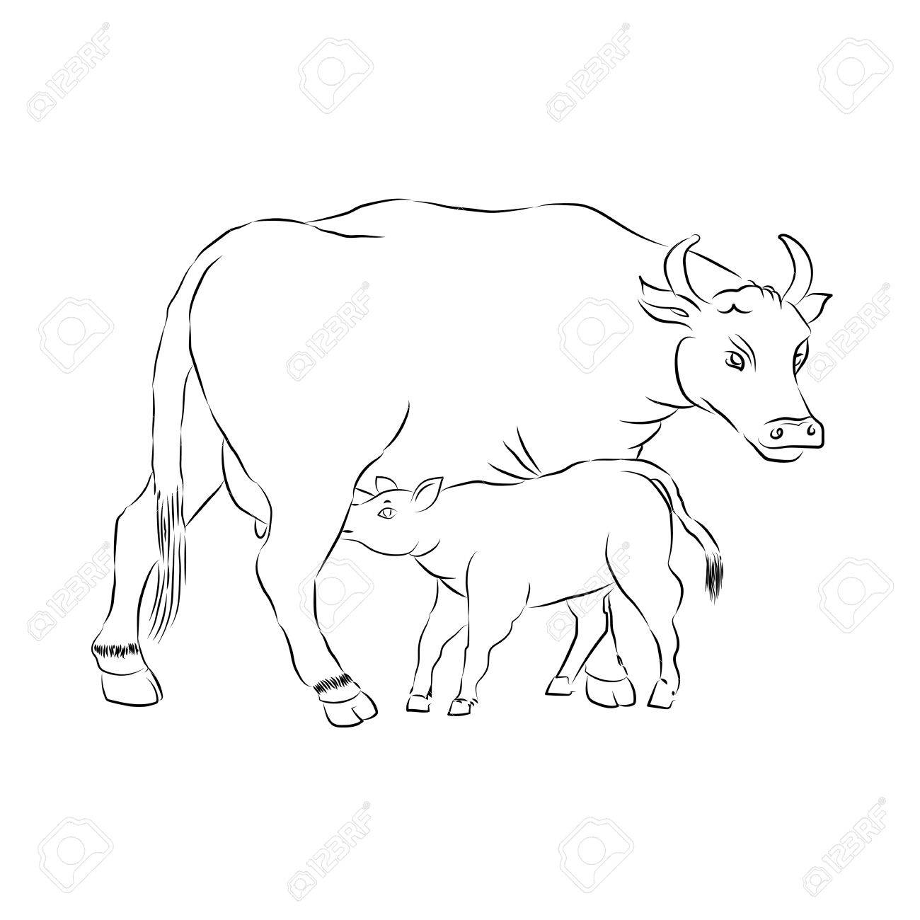 1300x1300 Cow And Calf Outline Vector Silhouette Illustration Sketch Hand