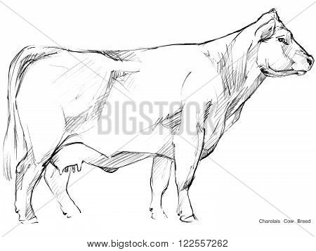 450x357 Cow. Cow Sketch. Dairy Cow Pencil Image Amp Photo Bigstock