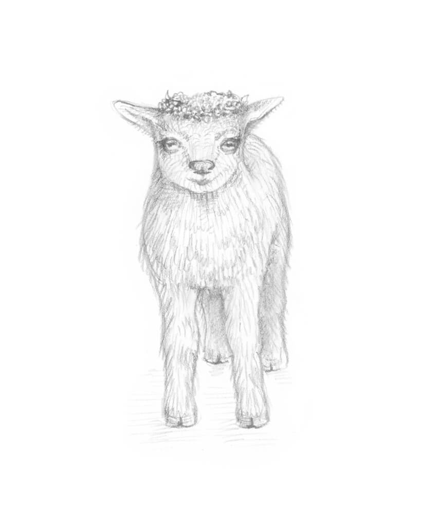 850x990 How To Draw A Goat Step By Step