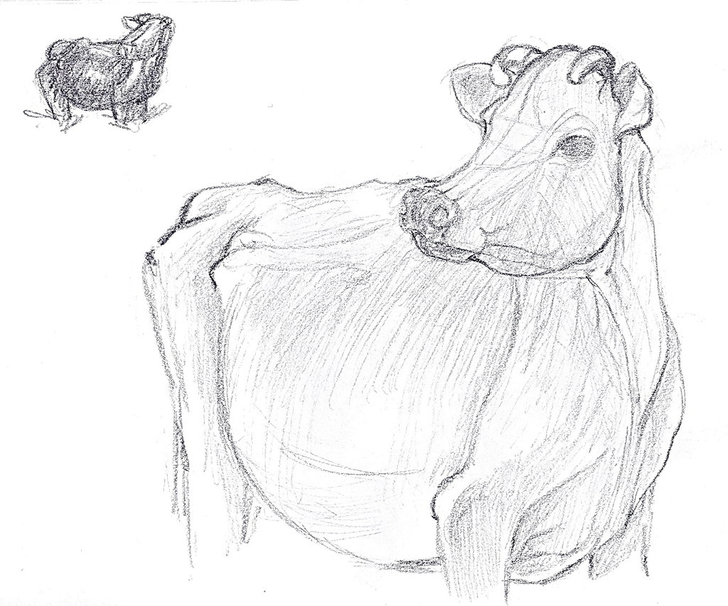 1024x853 Pencil Drawings Of Cows Cow Sketch Lilithdarck