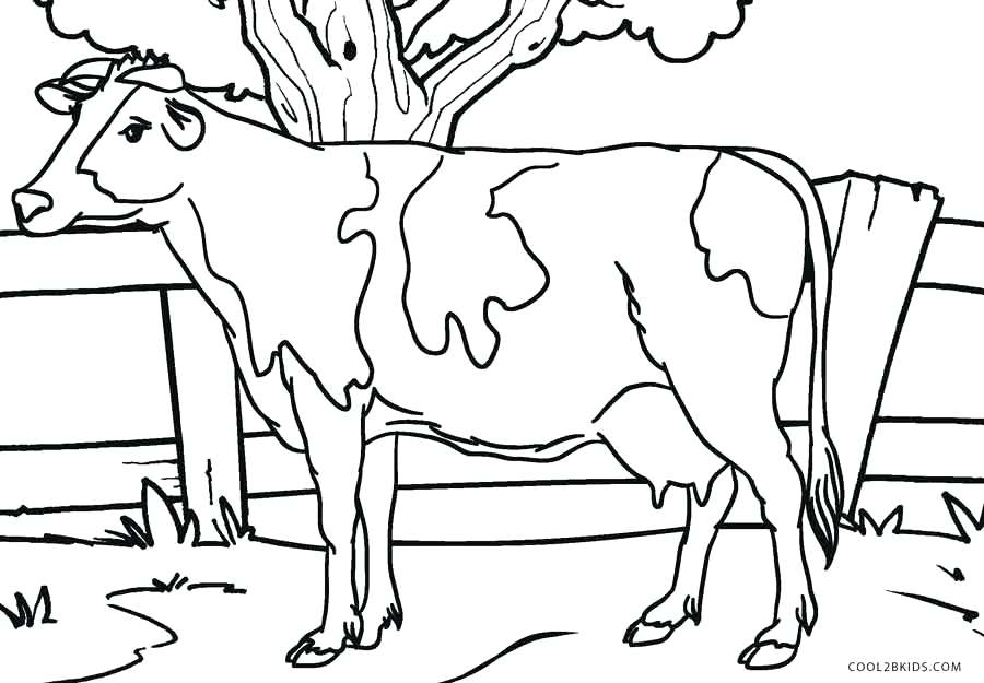 900x625 Coloring Pages Cow Printable And Sheets For Kids Thanksgiving