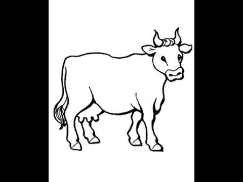 480x360 How To Draw A Cow