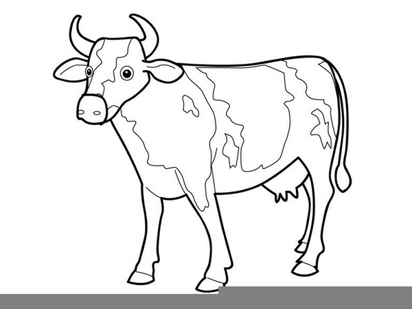600x450 Cow Drawing Outline Free Images
