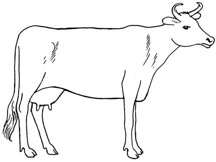 430x323 Simple Cow Line Drawing
