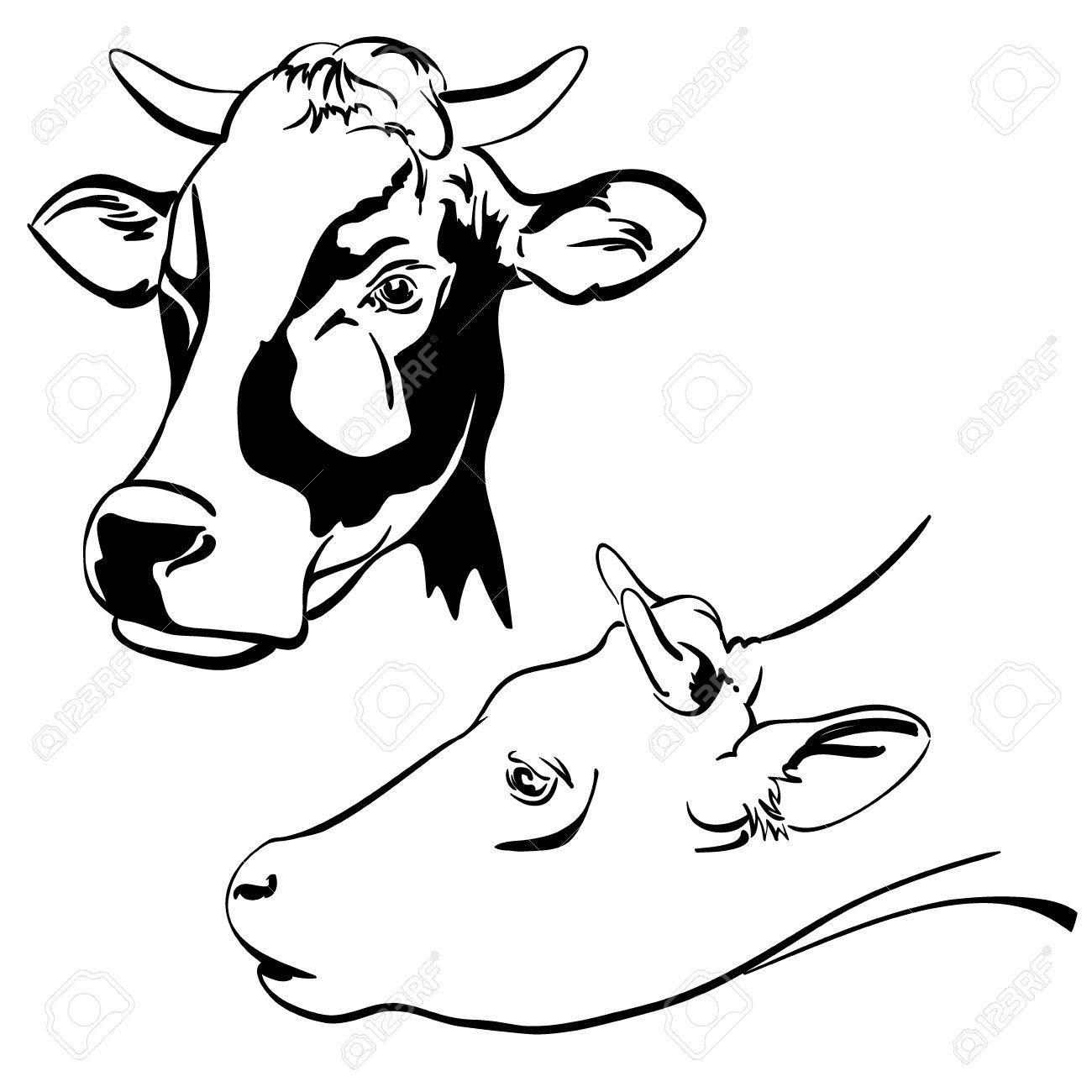 1300x1300 Cow Set Cartoon Vector Illustration Sketch Royalty Free Cliparts