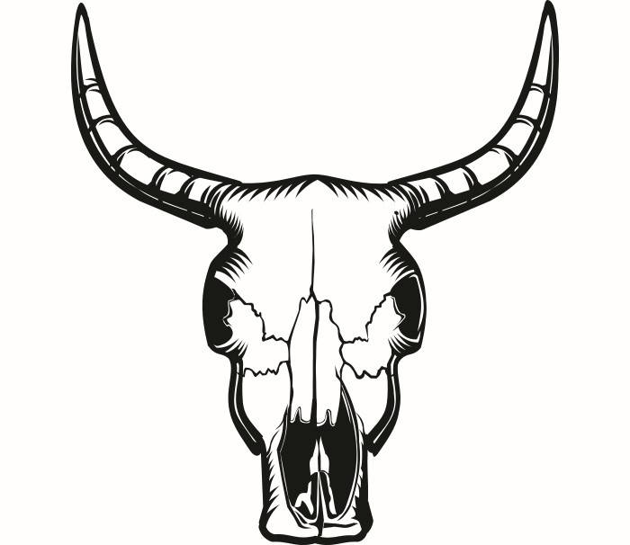Cow Skull Drawing At Getdrawings Com Free For Personal Use