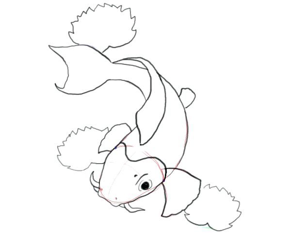 600x500 Koi Fish Coloring Pages Fish Coloring Pages Realistic Koi Fish