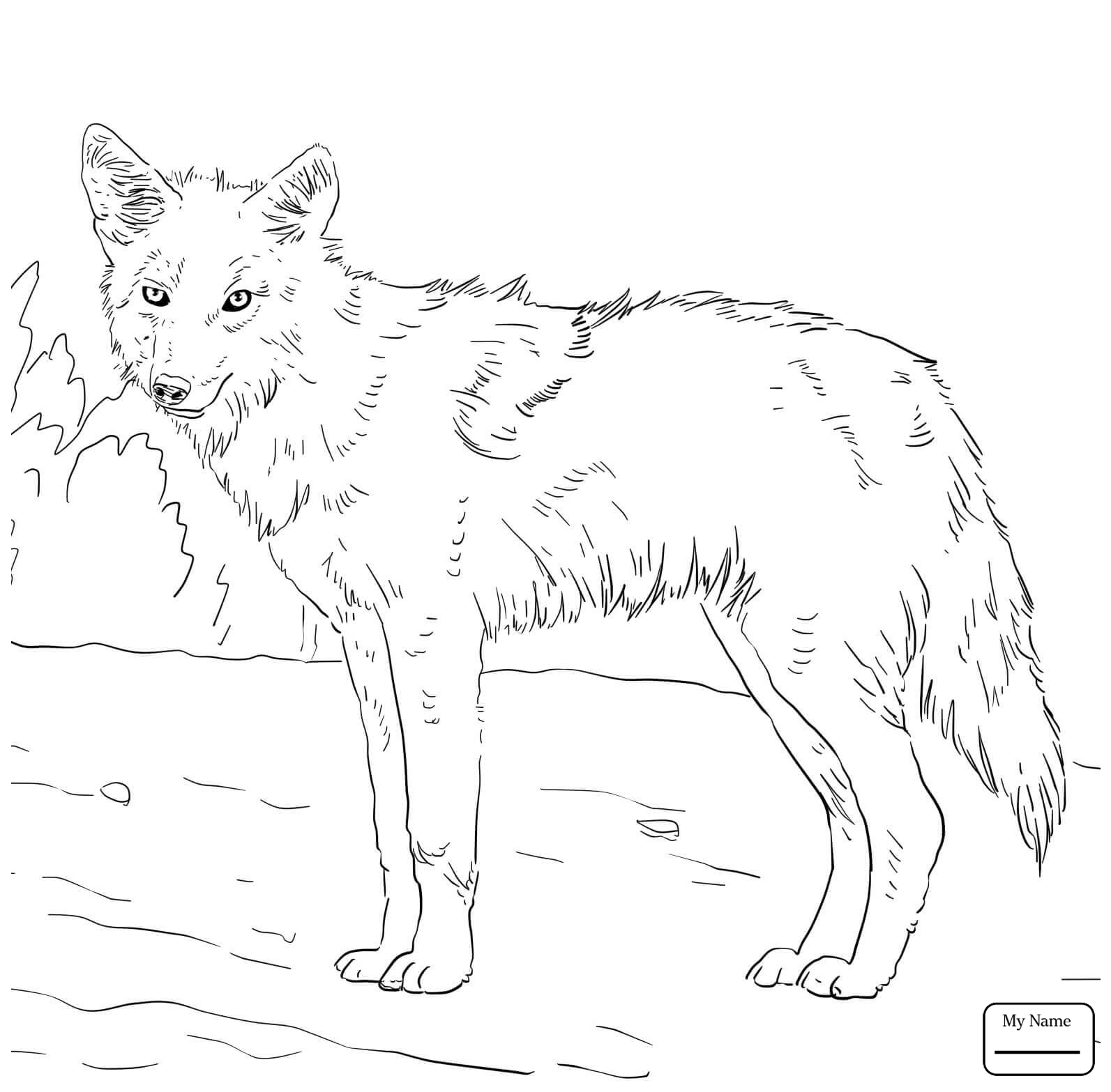 1593x1567 Coloring Pages For Kids Coyote American Jackal Coyote Mammals