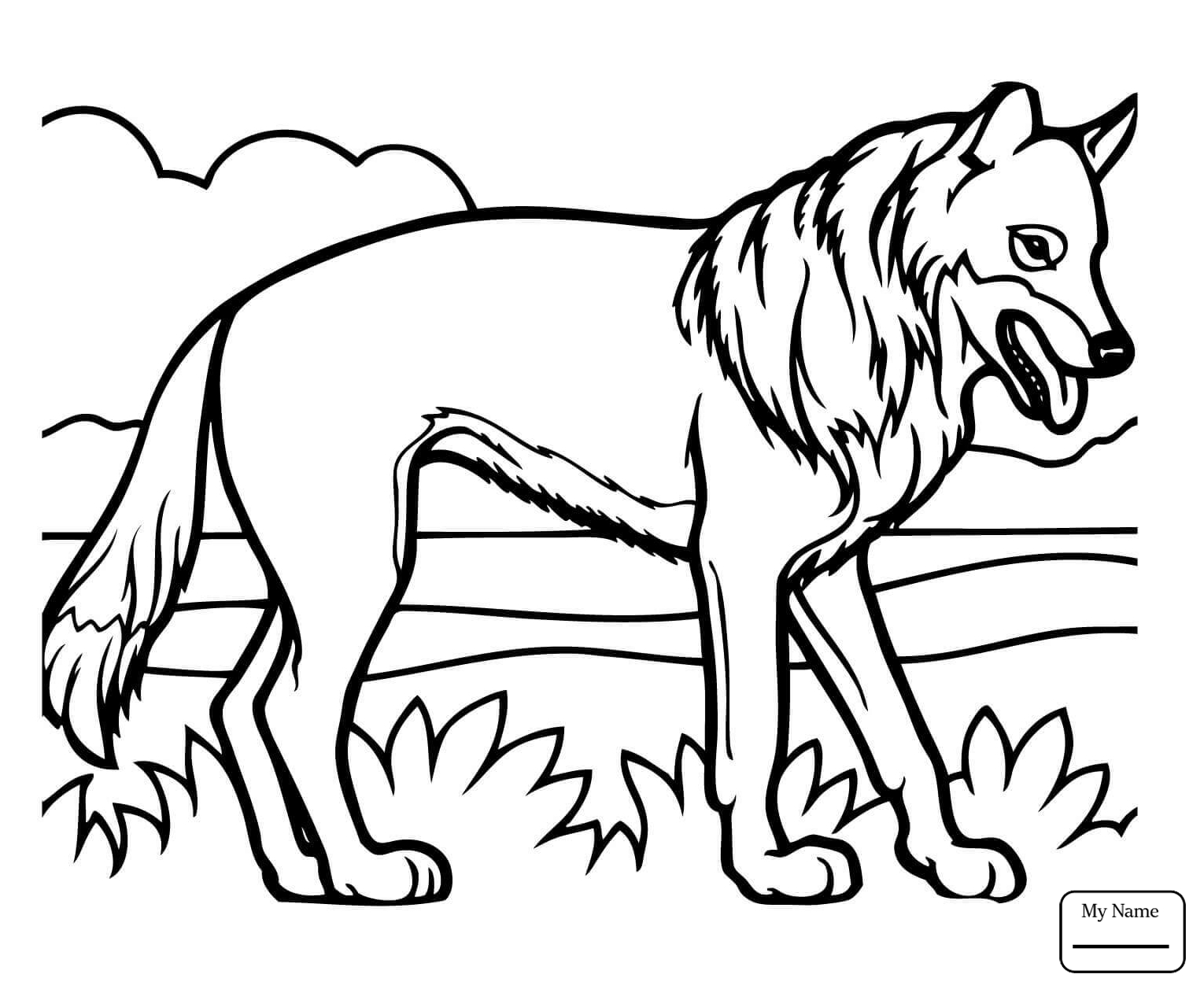 1530x1257 Coloring Pages Brush Wolf Or Coyote Coyote Mammals
