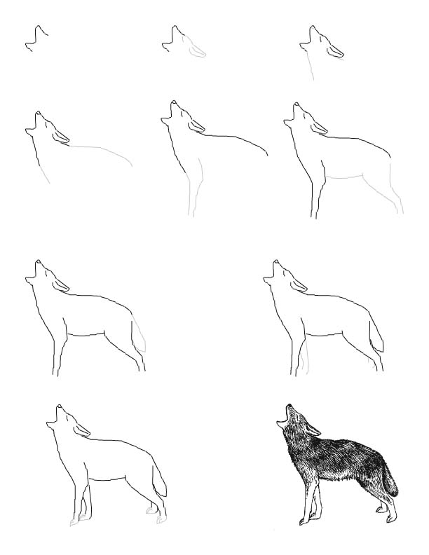 612x792 Drawn Coyote Forest Animal