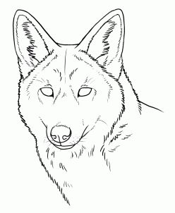 248x302 The Best Coyote Drawing Ideas On Coyote Tattoo