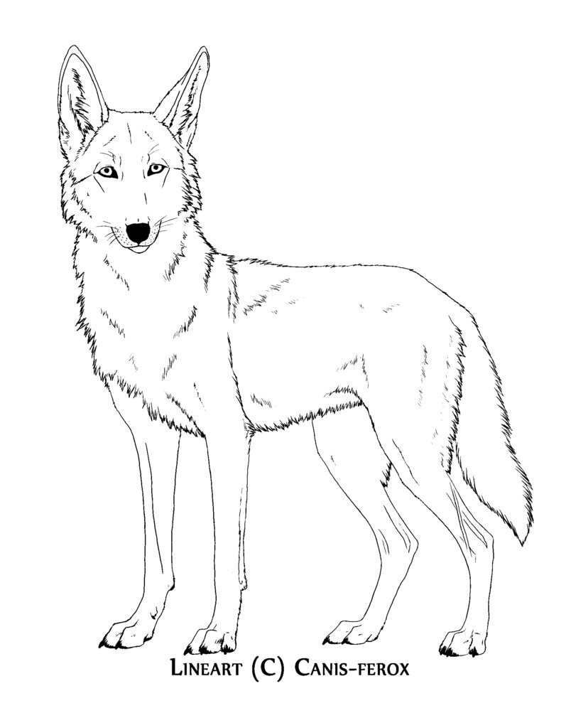797x1003 Coyote