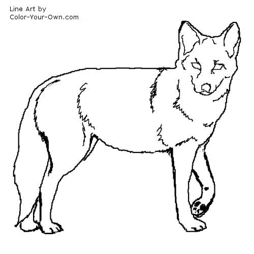 500x500 Coyote Coloring Page Coyote Coloring Page