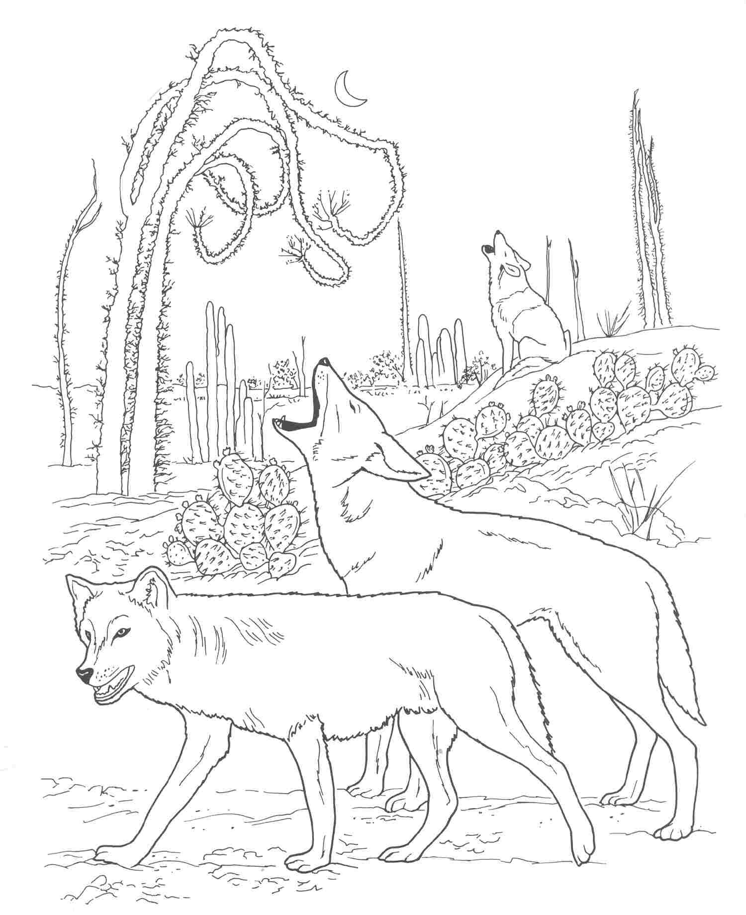 1500x1839 Coyote Animal Coloring Pages Coyote Animal Coloring Pages Free
