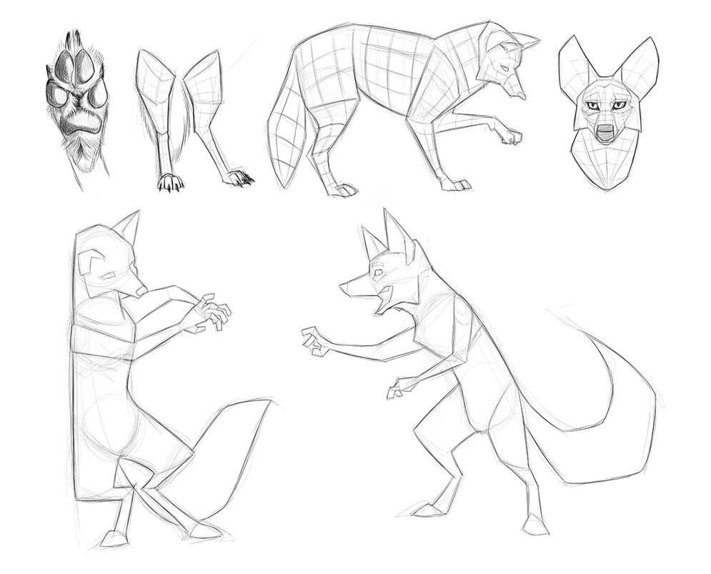 995x803 Coyote Reference Sketches