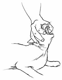 200x255 How To Save A Choking Cat (Kitty Cpr) 98.1 Wogl