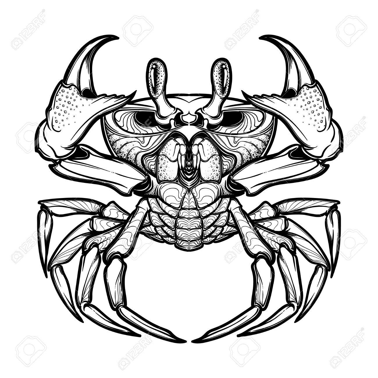 1300x1300 Cancer. Accurate Symmetrical Drawing Of The Beach Crab. Concept