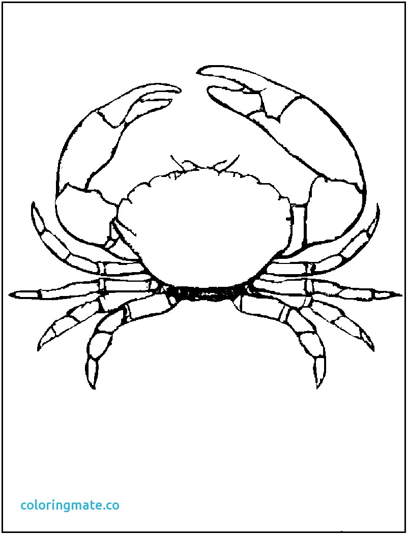 Crab Drawing Images
