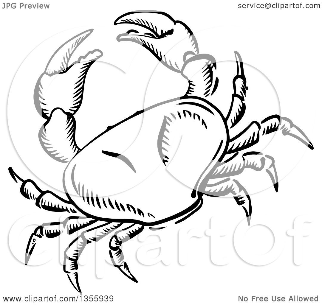 Crab Drawing Images at GetDrawings.com | Free for personal use Crab ...