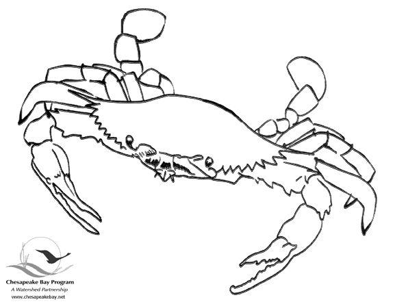 574x444 Drawn Crab Maryland Crab
