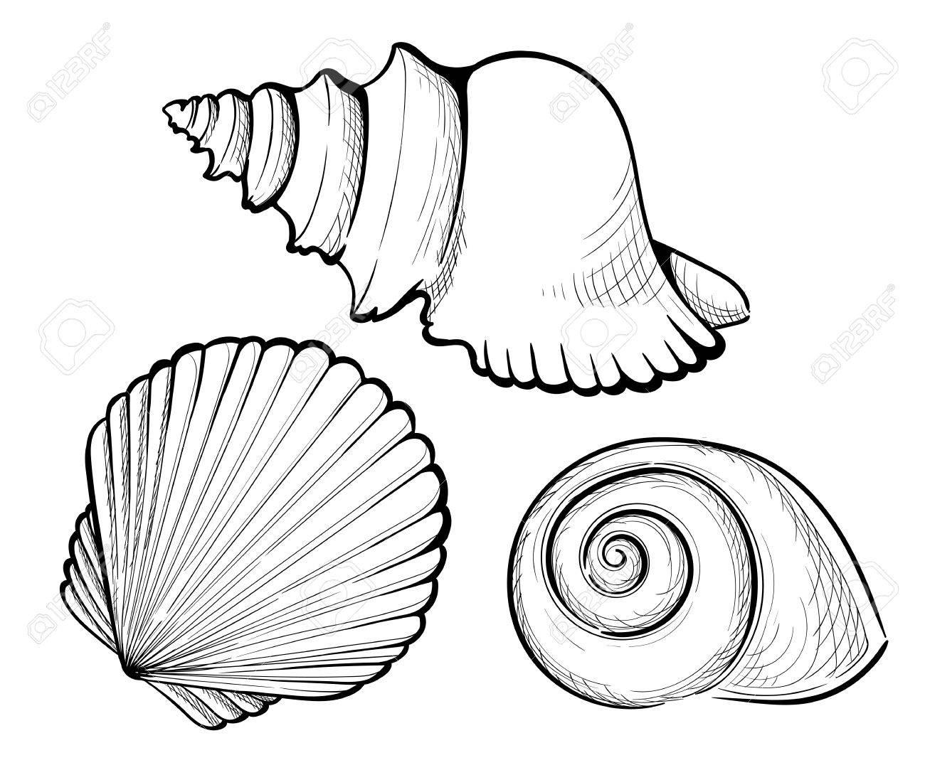 1300x1083 Hand Draw Set Sea Shell, Coral, Crab, Shrimp And Octopus. Vector