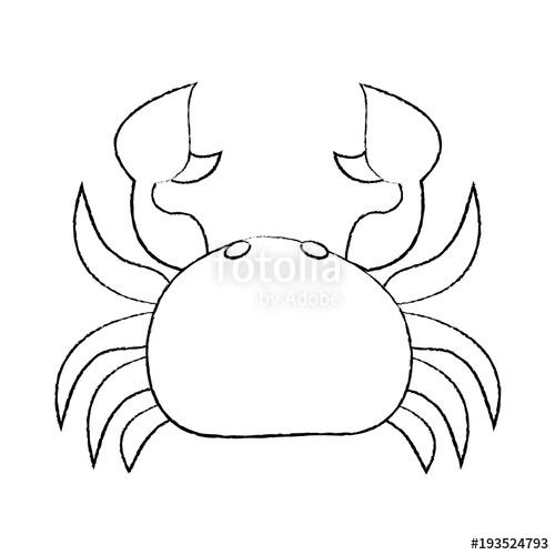 500x500 Sea Wild Life Crab Marine Animal Image Vector Illustration Sketch