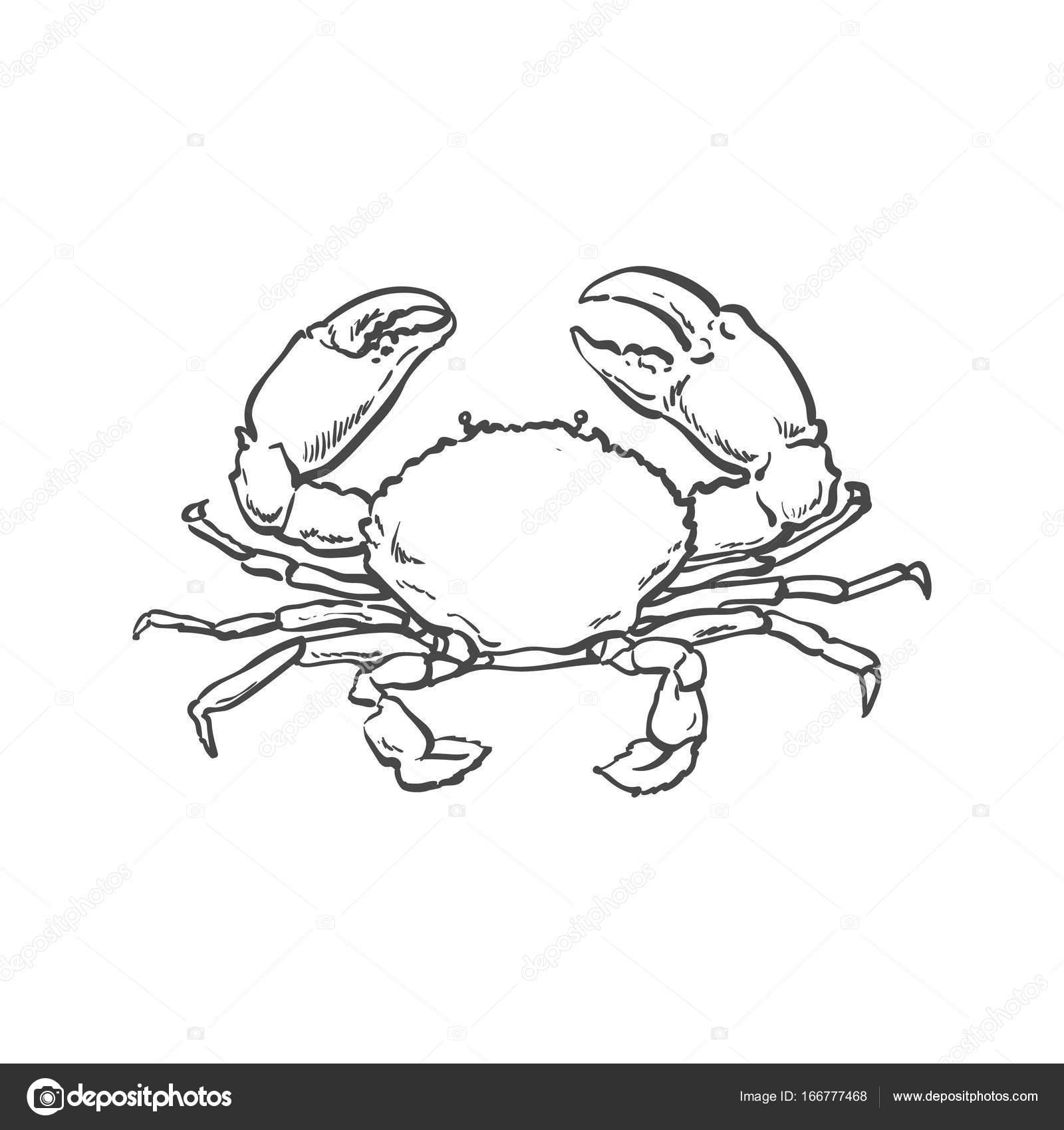 1600x1700 Vector Sketch Cartoon Sea Crayfish Crab Isolated Stock Vector