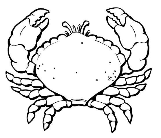 556x476 Attractive Design Ideas Crab Coloring Pages Animal Free
