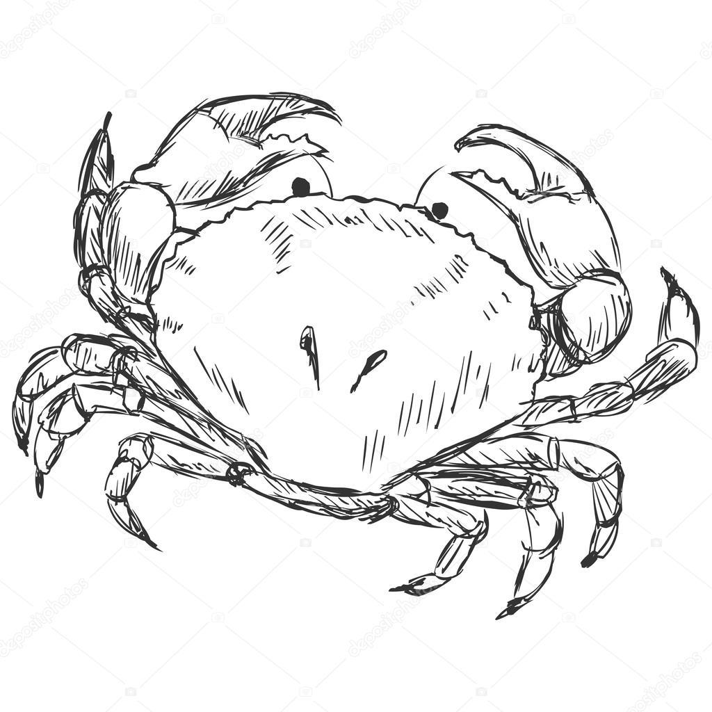 1024x1024 Crab Sketch Stock Vector Nikiteev