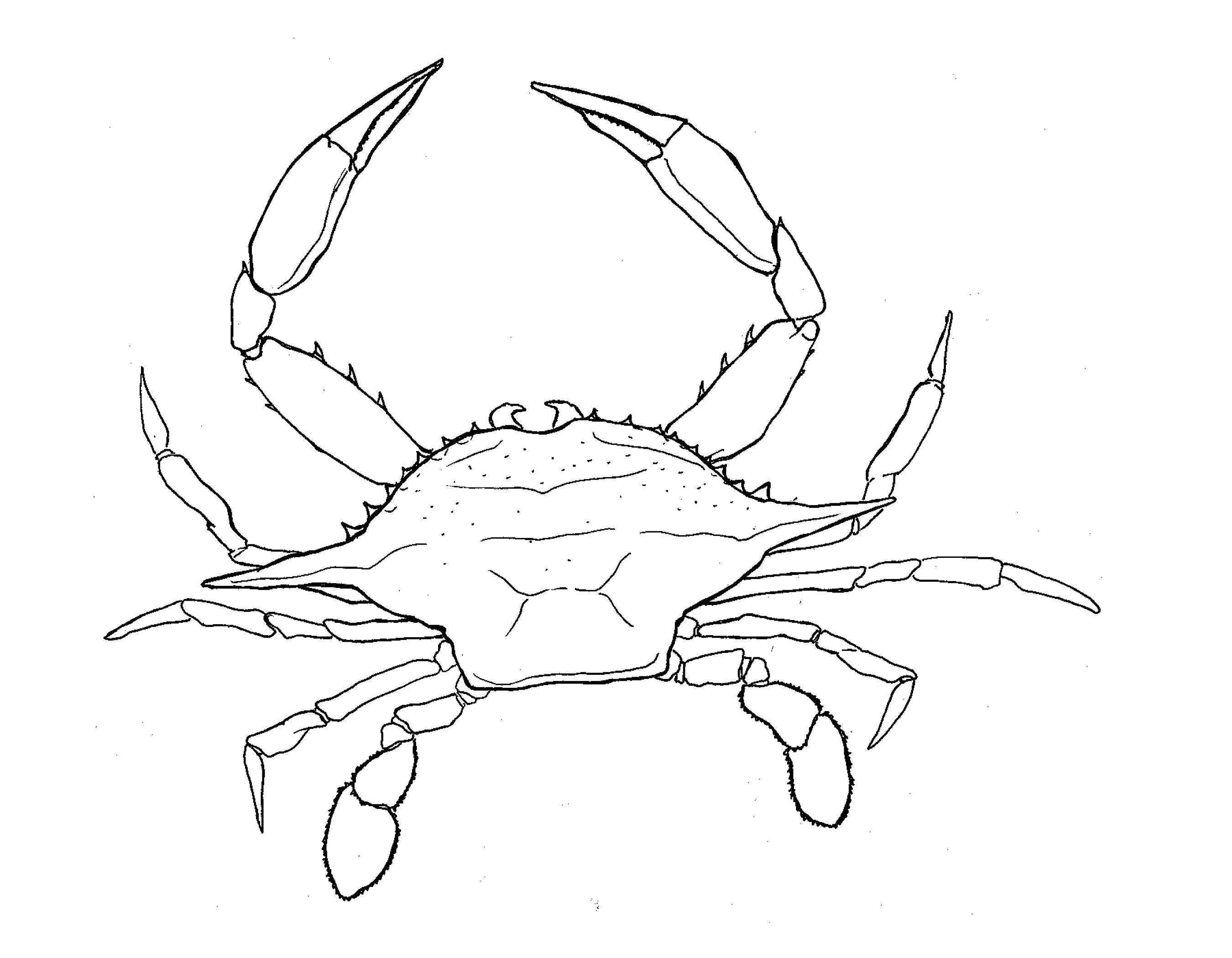 2700x2100 N'East Illustrated Chesapeake Bay Blue Crab N'East Style