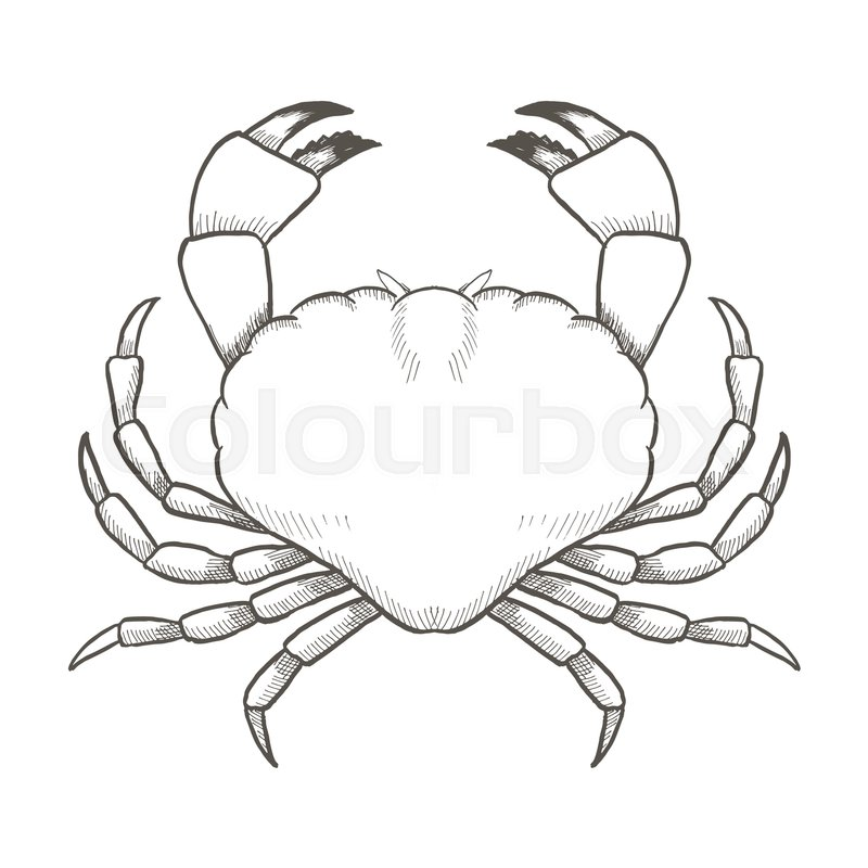 800x800 Crab Drawing On White Background. Hand Drawn Outline Vintage
