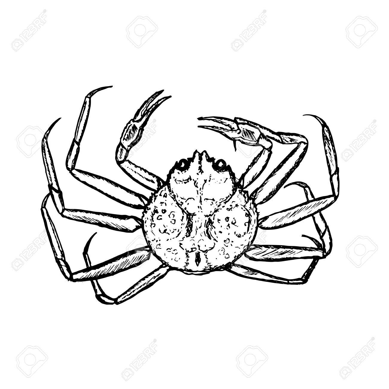 1300x1300 Hand Drawn Vector Crab, Outline Royalty Free Cliparts, Vectors